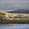 The idyllic scenery of New Island, Falkland Islands
