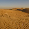 Dune bashing evening excursion in the UAE.