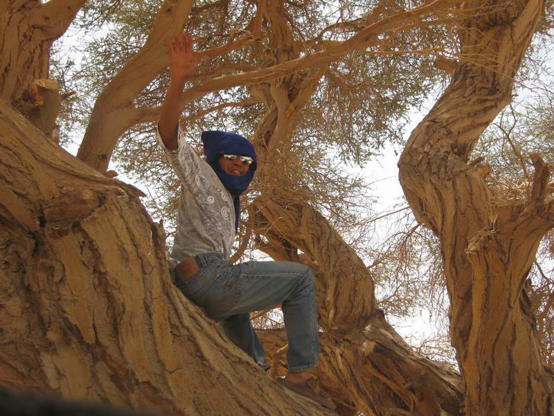 Rei hangs out in a tree at a lunchtime stop in the desert outside Agadez, Niger.