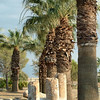 Palms mimic the ruins of columns at Paumukkale in central Turkey.