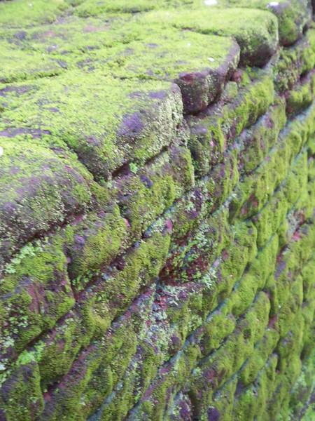 Mossy wall in rural Sri Lanka.