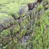 Mossy wall in rural Sri Lanka.