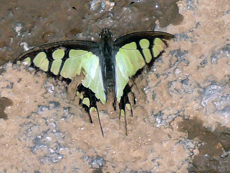 Kunming buttlerfly