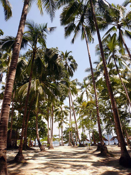 Idyllic beachside palms at El Nido, Palawan, Philippines.