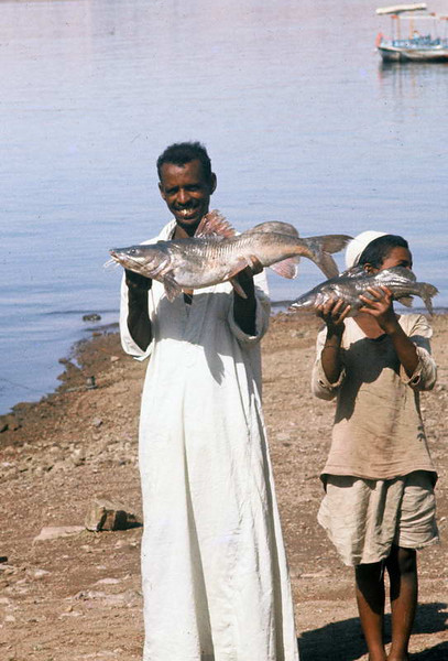Fresh dinner catch from the shores of the Nile in Aswan Egypt.