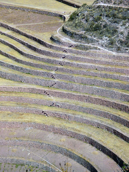 Detail of the terraced micro-climate crop circles of Moray, Peru.