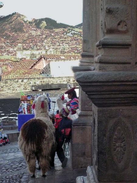 Llamas await the Inti Raymi parade off the main square in Cuzco, Peru.