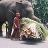 Streetside pacyderm labor in Alleppy, Kerala, India.