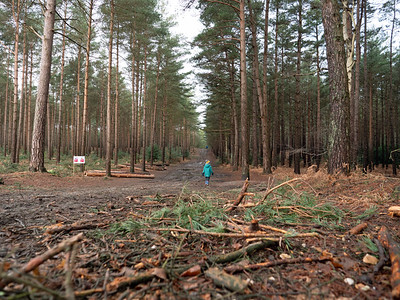 Go Walking in Swinley forest, Bracknell