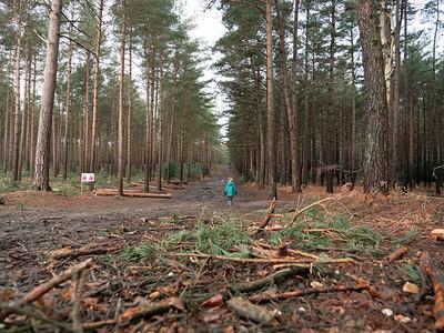 Go Walking in Swinley forest, Bracknell