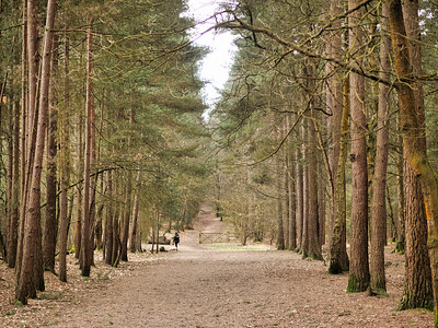 Swinley forest walk