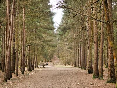 Swinley forest walk