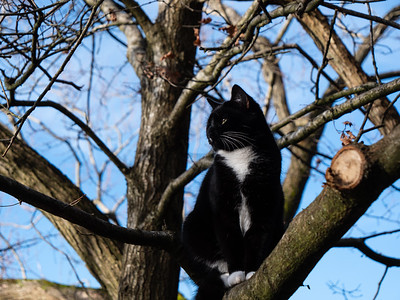 Black cat with white stripe sitting on the tree