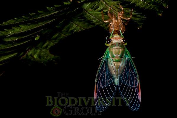 Biodiversity Group, _DSC9004