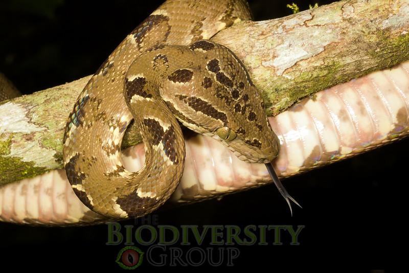 Biodiversity Group, IMGP4919