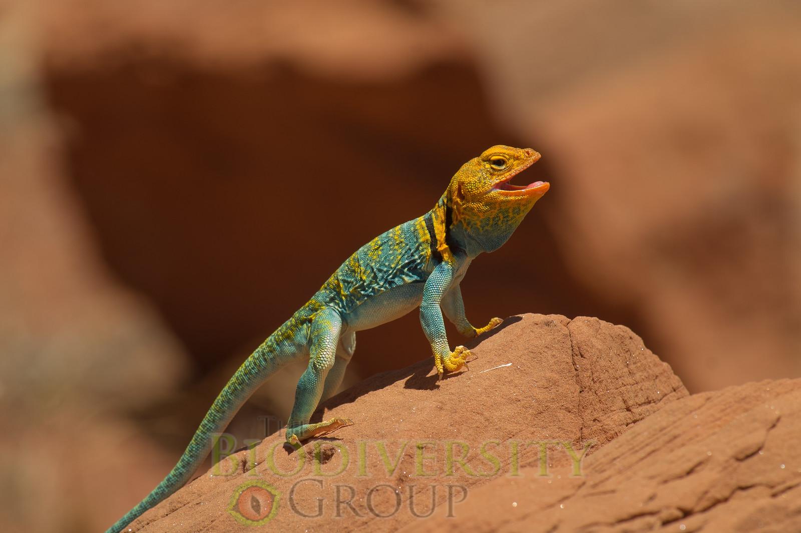 Biodiversity Group, PICT4591