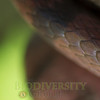 Biodiversity Group, _MG_2685
