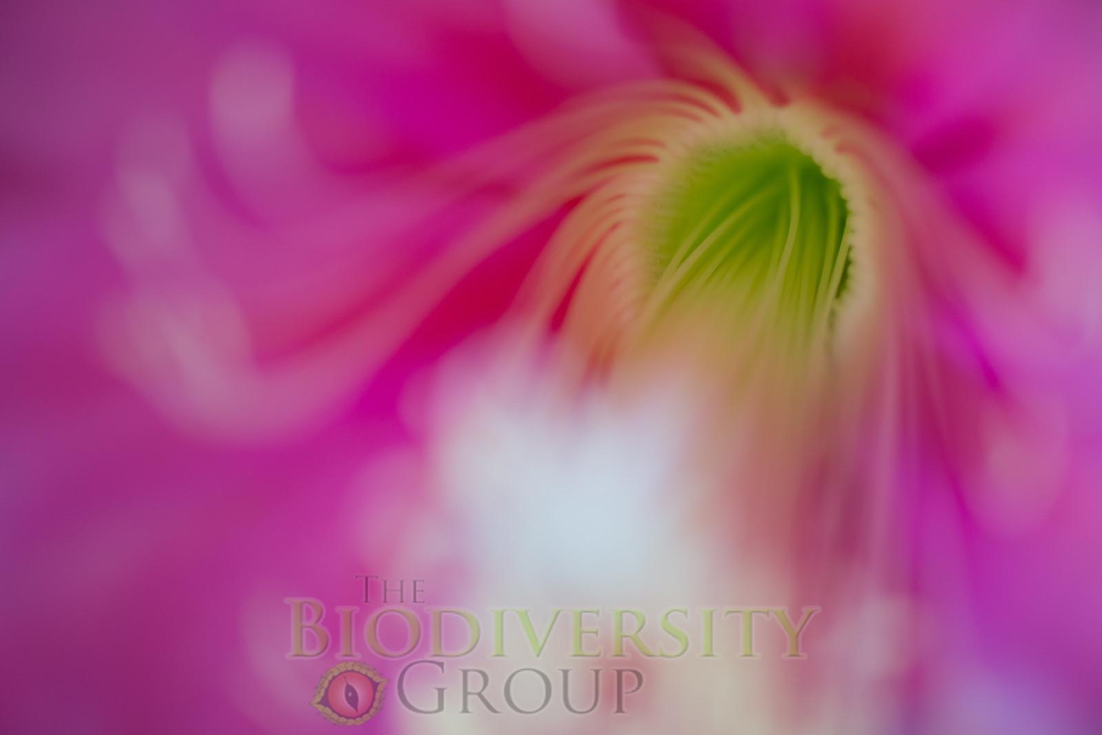Biodiversity Group, _DSC5453