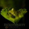 Biodiversity Group, _DSC0453