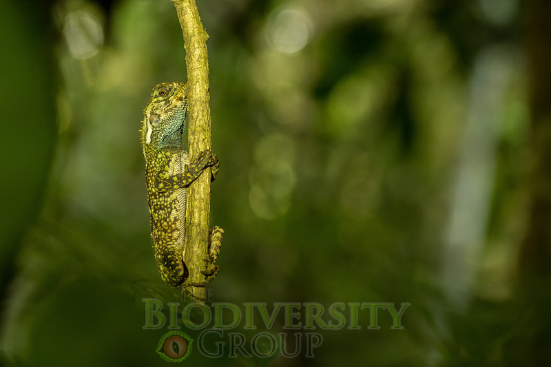 Biodiversity Group, DSC04050