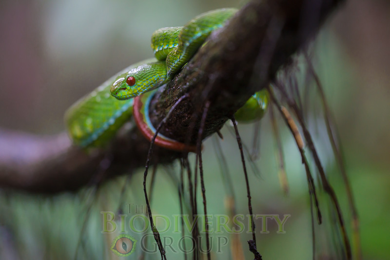 Biodiversity Group, _DSC3898