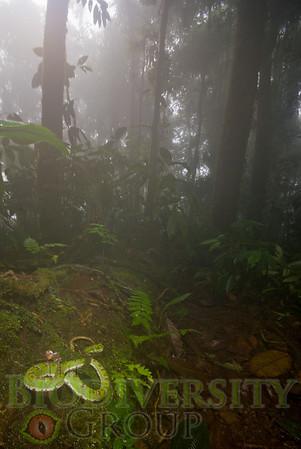 Biodiversity Group, DSC08514