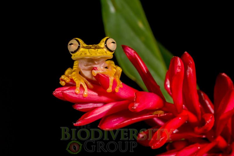 Biodiversity Group, DSC04969