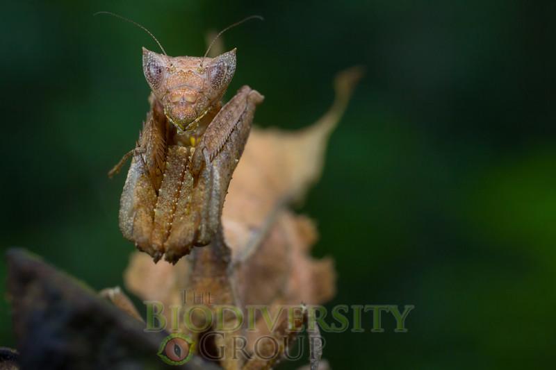Biodiversity Group, _MG_0511