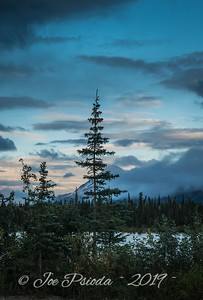Black Spruce's View of Alaska Range