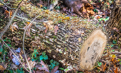 Mushrooms Befriend a Log