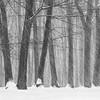 Defying Winter's Wrath