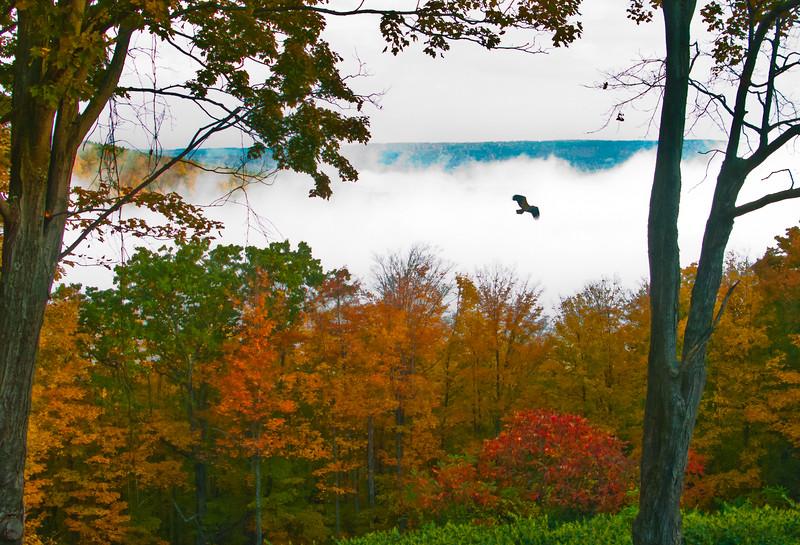 Hawk and Mist