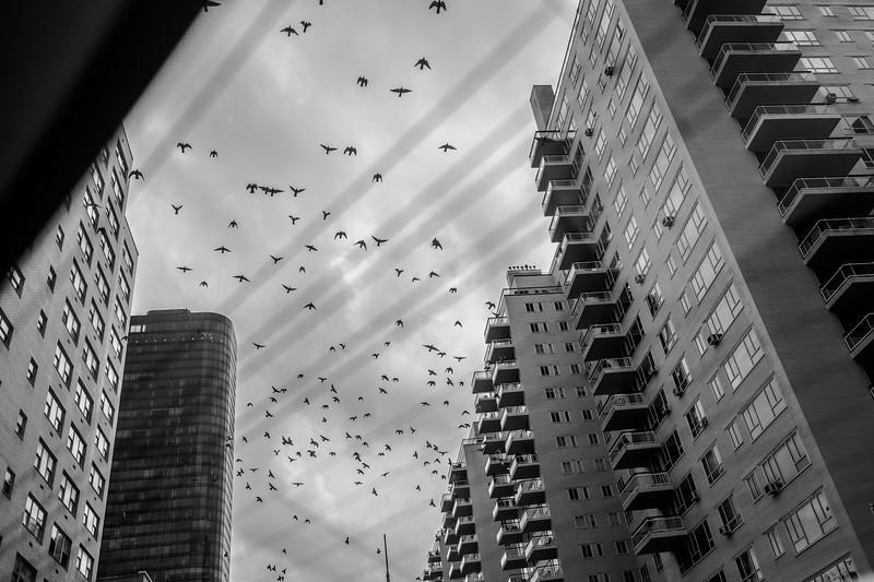 Rear Window (The Birds)