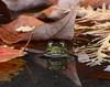 Leaf Peeper