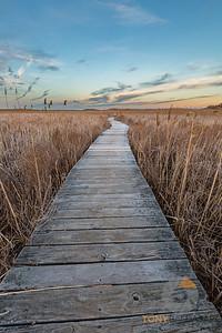 Marshland Path