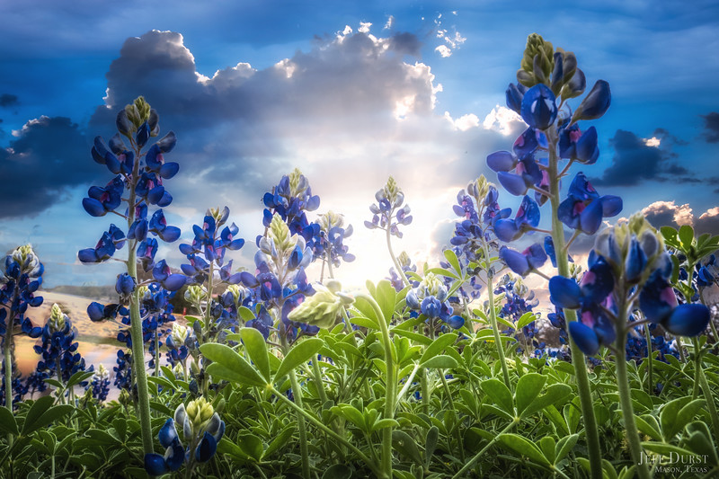 Bluebonnets 2018 Clinic Dream Sunset-Edit