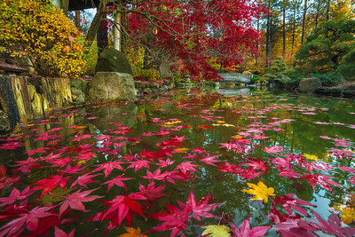 Autumn Afloat