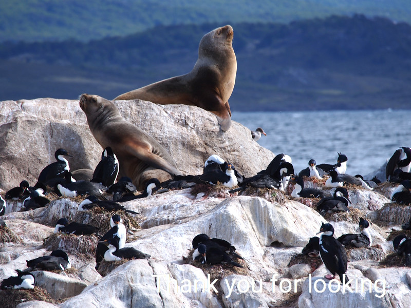 The Beagle Channel: Patagonia