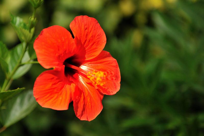 Taormina: Giardini di Villa Communale