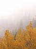 Golden Fog, Mt. Evans, Colorado