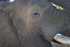 Wisdom, Elephant Whispers, South Africa