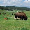Buffalo Outlook
