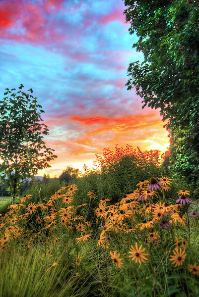 Oregon summer sunset. Leaburg, Oregon