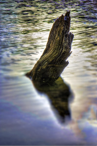 Wood in water