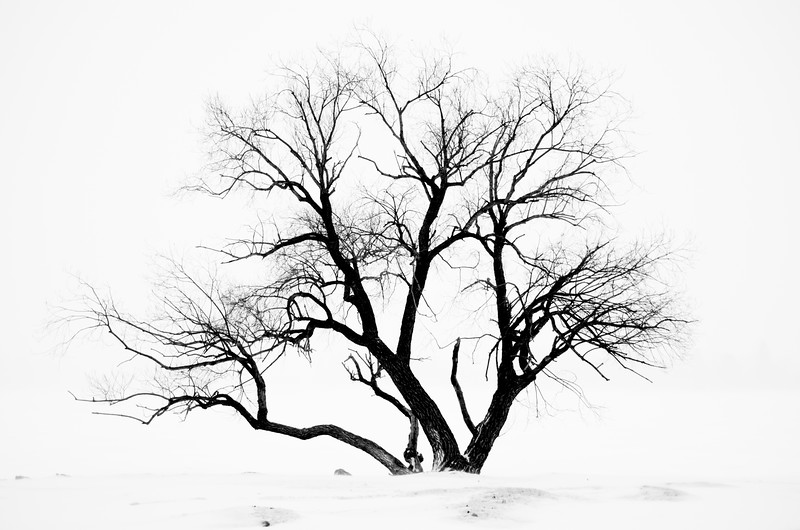 Winter's Tree
