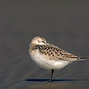 sanderling oceanshores washington