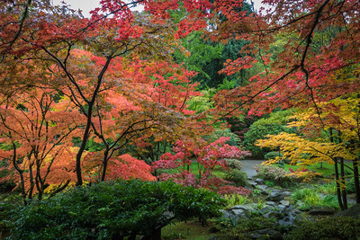 Fall at Japanese Garden