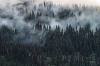 Foggy Sunrise at Mt. Rainier National Park