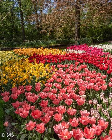 Keukenhof Tulip Gardens