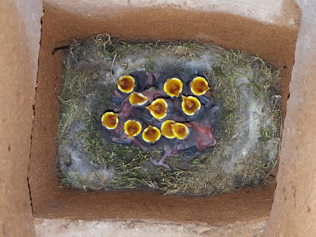 https://photos.smugmug.com/Best-of-Birds/i-4NjQDxP/0/aa04c57f/XL/20160528_094556-XL.jpg